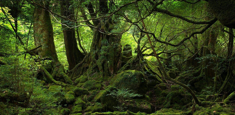 alberi-cover-2